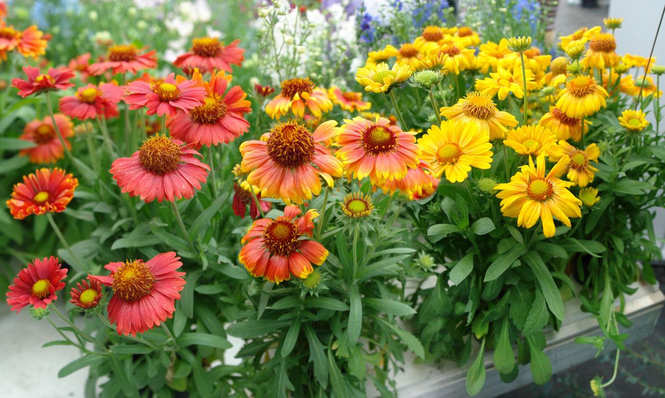 Семена биотехника цветы