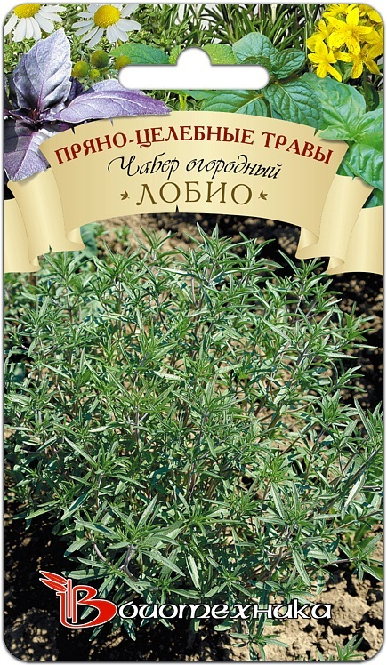 Чабер гном выращивание из семян 74
