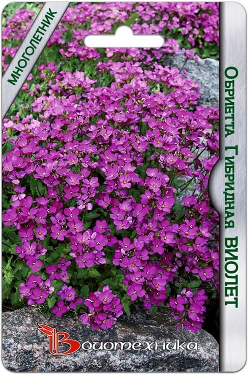 В НАЛИЧИИ! Обриетта гибридная Виолет